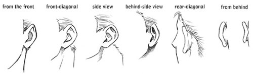 tutorials_howtodraw_ears The Best Drawing Tutorials to Learn How To Draw
